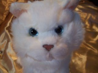 White Persian Cat Plush stuffed animal only ~~ NO ONLINE CODE