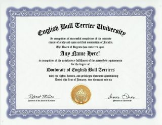 English Bull Terrier Dog Diploma Pet Owner Fun Gag Gift