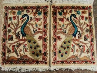 Peacock in Jungle Bird Fine Hand Knotted Rug Wool Silk Carpet Tapestry