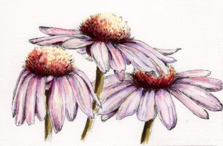 OSWOA Flower Painting   Coneflowers by Art Norma J Burnell Flowers