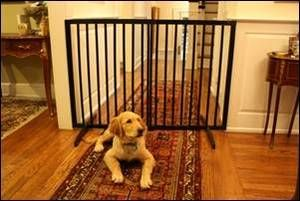 Cardinal Gates Extra Tall Freestanding Safety Pet Dog Baby Gate Black