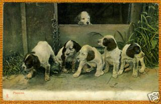 English Springer Spaniel Puppy Group Old Dog Postcard