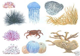 Sea Coral Art Transfers Creative Art Decal Wall Decor